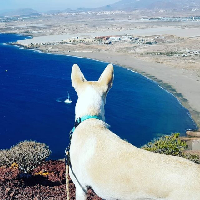 Our lil friend and the view! Nase mala kamaradka hellip